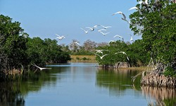 Florida Everglades Experience