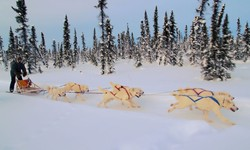 Dog Mushing in Denali