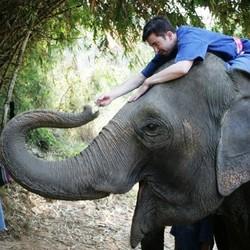 Elan on Elephant