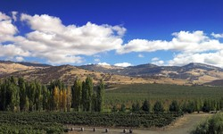 Get a Taste of Orgeon's Wine Country