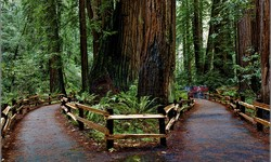 Redwood Forest Escape