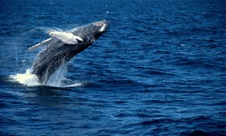 Private Catamaran Whale Watching Adventure