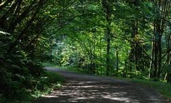 Forest Park Portland