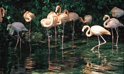 Birding Expedition to the Oviedo Lagoon