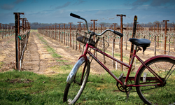 Vineyard Biking Adventure