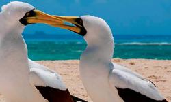 Exotic Island Birdwatching