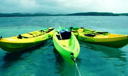Mangrove Kayaks and Eco Tour